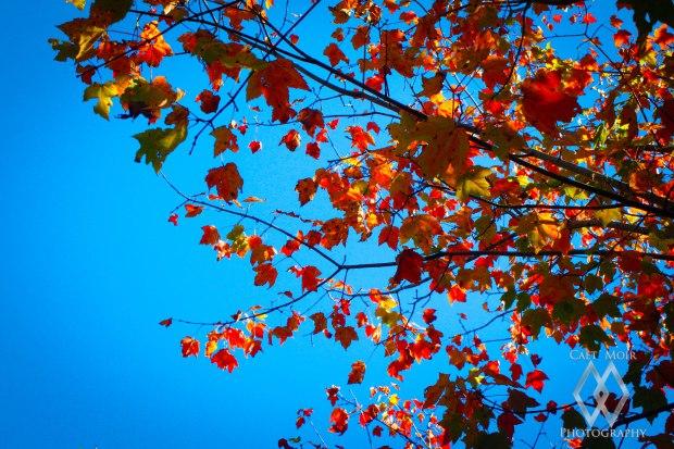 [Sky] Fall