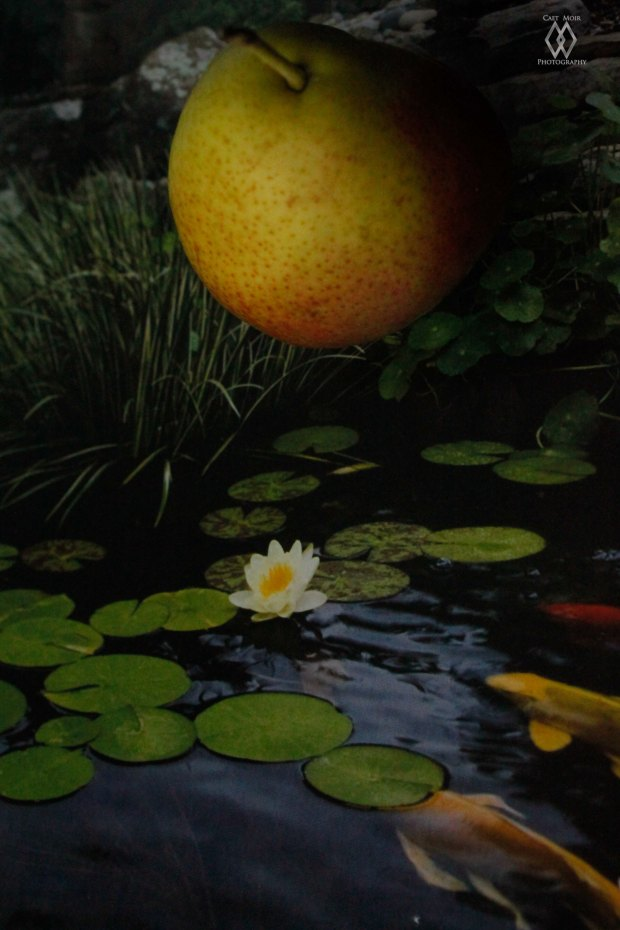pear in a pond