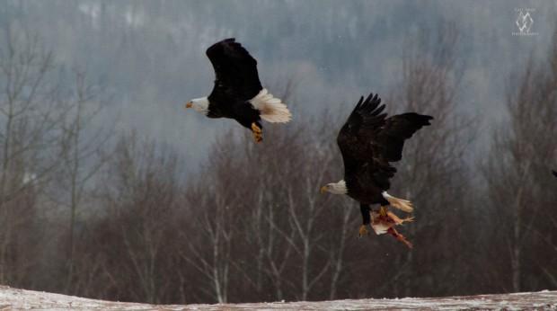 Caet eaglewatch-11