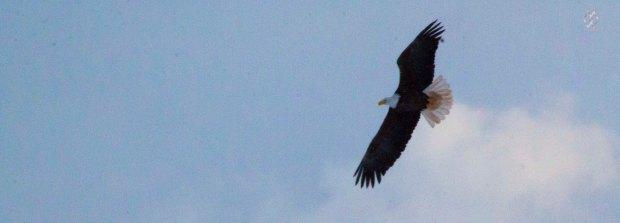 Caet eaglewatch-25