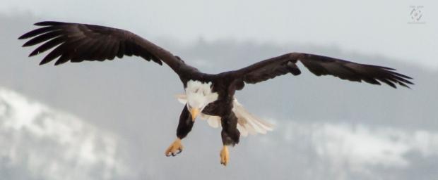 Caet eaglewatch-35