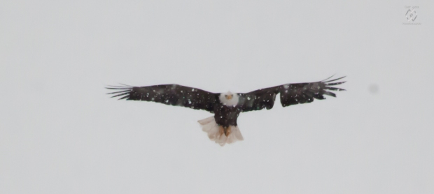 Caet eaglewatch-37