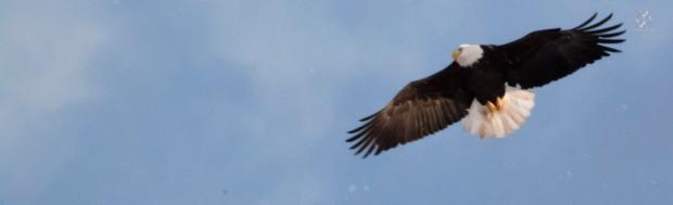 Caet eaglewatch-7