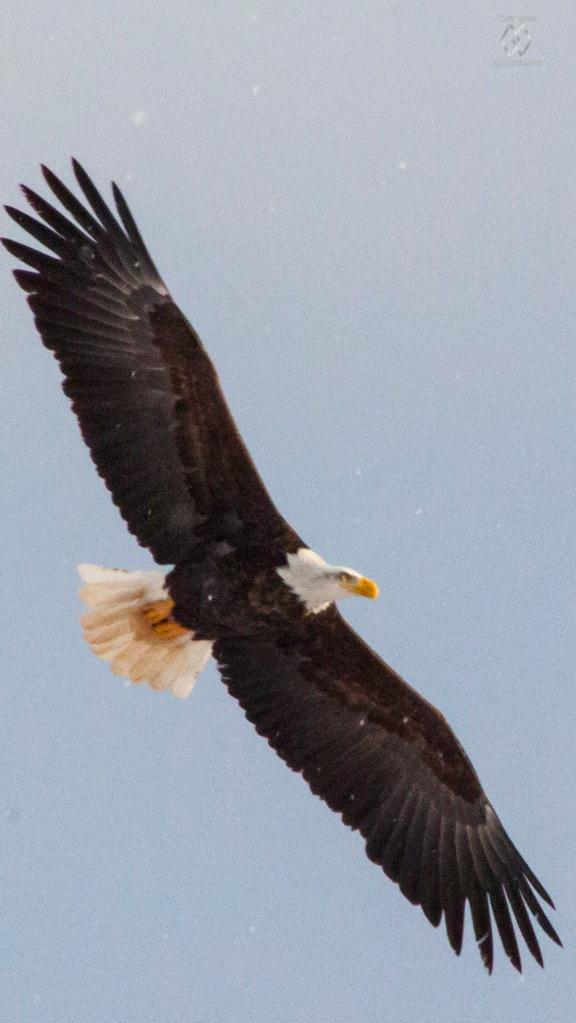 Caet eaglewatch-8